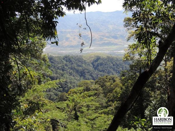Nueva Ecija Forest
