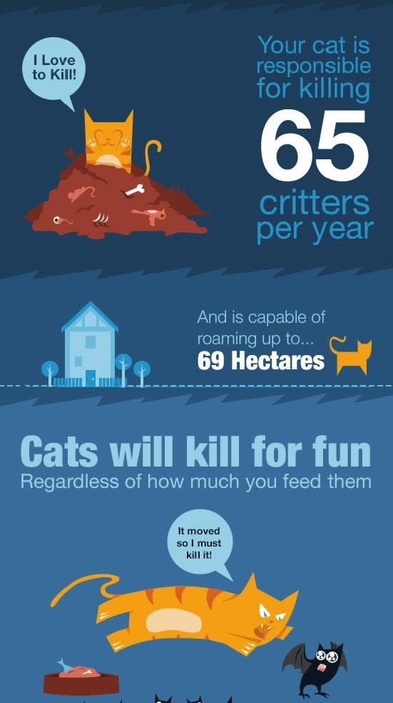 Cats to Go Infographic