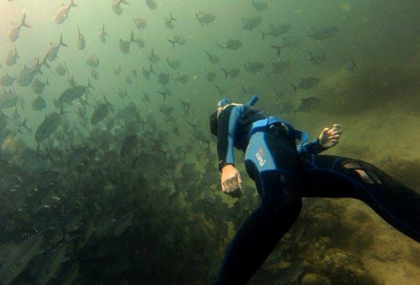 Freediving with Jacks