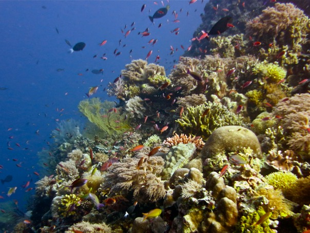 Tubbataha Reef - Lory Tan WWF