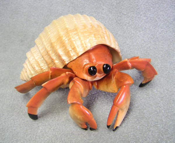 Natural Hermit Crab Shells a Shell a Hermit Crab